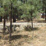 8-Spruce-Drive-Image-11
