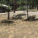 8-Spruce-Drive-Image-5